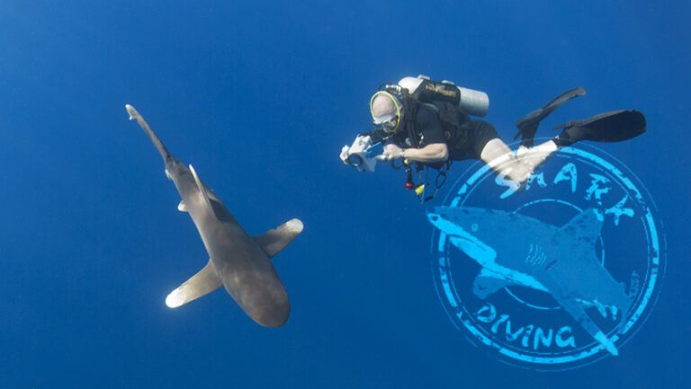 Programa Shark Diving: buceo con tiburones